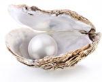 珍珠被看作是贝蚌的眼泪,因为是贝蚌痛苦与努力才结成的珍贵宝石