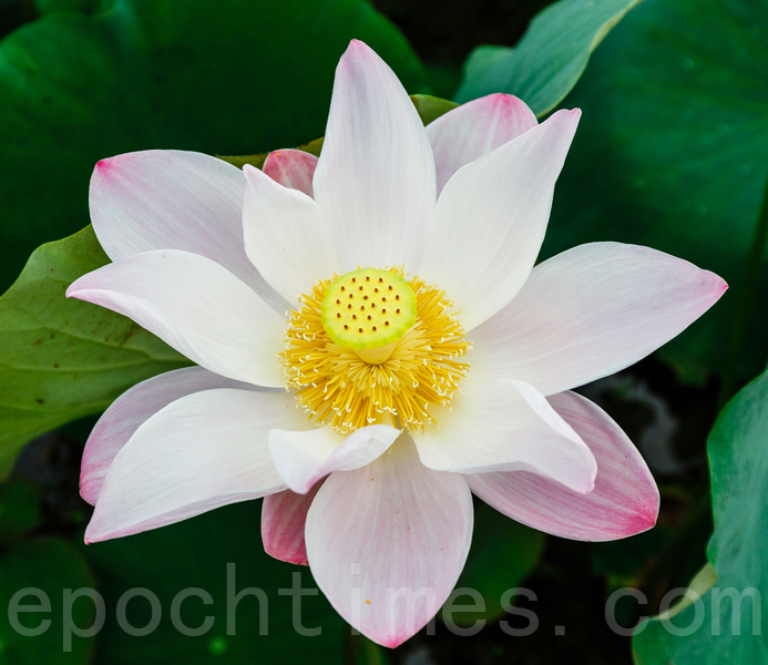 為世人編織一幅綉有美麗花朵的織綿,這是神為我們繡出的萬里春色、無邊榮華。(鄭順利/大紀元)