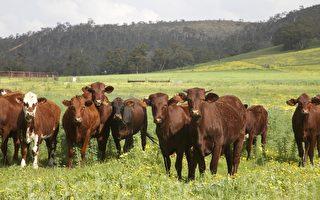 西澳新增24例确诊 下周执行乡村地区限制令