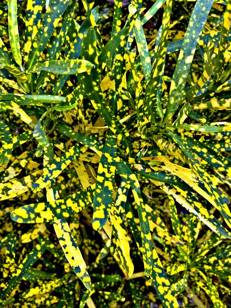澳洲色彩元素,浓浓的土着味道(伊罗逊/大纪元)