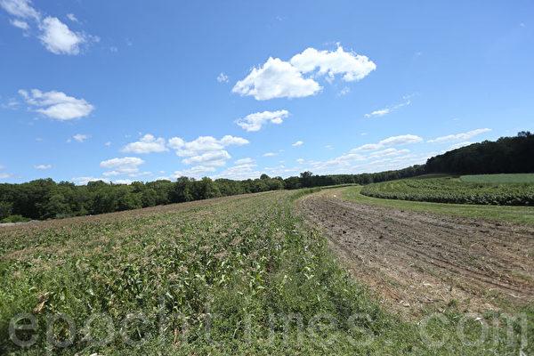 佔地600英畝的奧斯提德農場。(張學慧/大紀元)