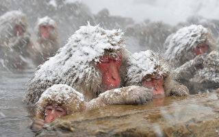 組圖:日本可愛動物大集合
