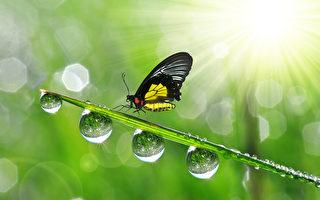 """白露时节,清晨时分会发现地面和叶子上有许多露珠,这是因为夜晚水汽凝结在上面形成露水。古人以四时配五行,秋属金,金色白,故以白形容秋露,称为""""白露""""。(fotolia)"""