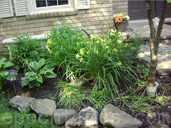这是新家门前的花池子的一部分,这里的大花是我从后院移来的,前面的石头是种花时挖出来的。后面的塑料石凳也是从后院移来的。门口台阶上的花是我用花苗搭配的。(李文笛/大纪元)
