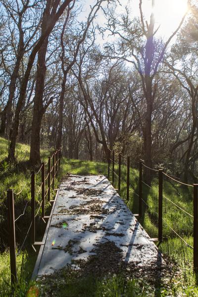 伍德賽(Woodside)92英畝的地產,開價3,500萬美元,還是一塊未開發土地。(Dana Cappiello提供)