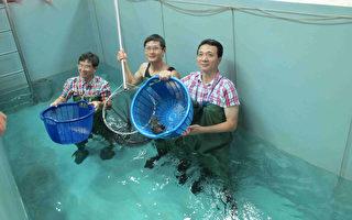 产业知性之旅 造访石斑鱼的故乡