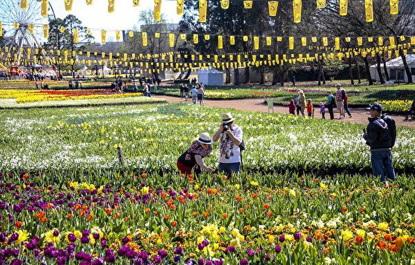 南半球最大的花展在澳大利亚堪培拉举行,进入了第28个年头。 (伊罗逊/大纪元)