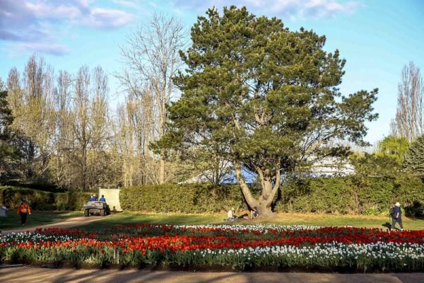 南半球最大的花展在澳大利亚堪培拉 举行,进入了第28个年头。(伊罗逊/大纪元)