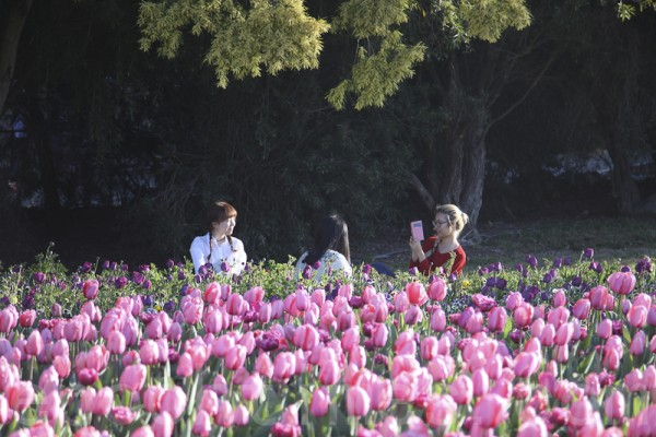 南半球最大的花展在澳大利亚堪培垃举行,进入了第28个年头。(伊罗逊/大纪元)