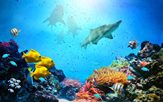 組圖:探索9座絕美海底世界