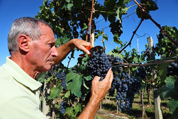 农夫预计至2022年的下滑比例为19%。(Fotolia)