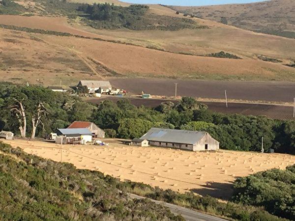 图:农场的丰收。(David Cline提供)