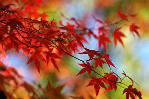 【节气典故】立秋食俗 古人的养生智慧