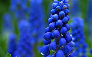 组图:Syl Lebar 花卉摄影(23)
