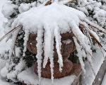 週五和週六(11月20、21日)兩天由於風暴來臨,美國中西部地區迎來第一場雪,並且還有更多大雪將要來臨。(邵林/大紀元)
