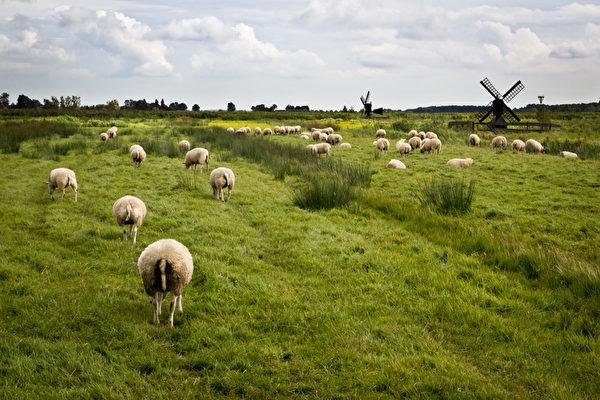 荷兰员工通常会避免长时间待在工作场所,只有0.5%的员工会工作时间很长。(fotolia)