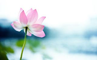 慈悲是為他的、無條件的、永恆的,永遠體現著平和、理性。(fotolia)