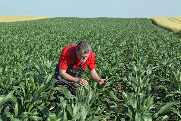 农夫与人际互动的机会低。(Fotolia)