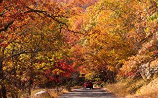 组图:纽约上州熊山州立公园秋色