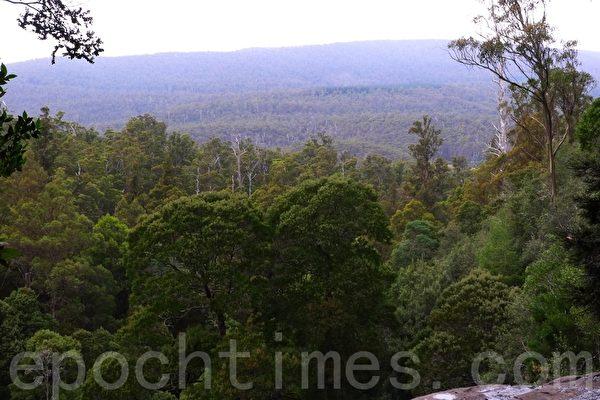 塔斯瑪尼亞最古老的自然保護區--菲爾德山(華苜/大紀元)