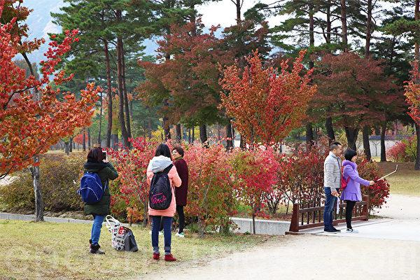 韩国首尔景福宫美丽秋色吸引国内外游客前来观赏。摄于11月2日。(全宇/大纪元)
