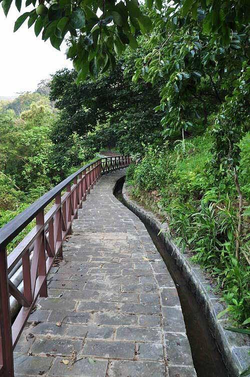 步道沿着水圳而行,沿途路旁有柿子树,树上结出不少果实。 (图片提供:tony)