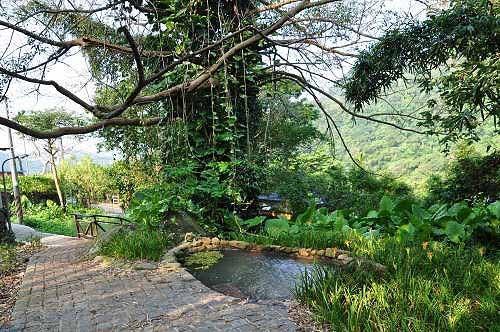 步道旁的雀榕老树及洗衣池(图片提供:tony)