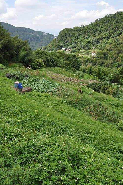 山坡辟成一层层的农圃。 (图片提供:tony)