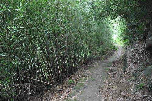过47号民宅,优雅的竹林路。 (图片提供:tony)