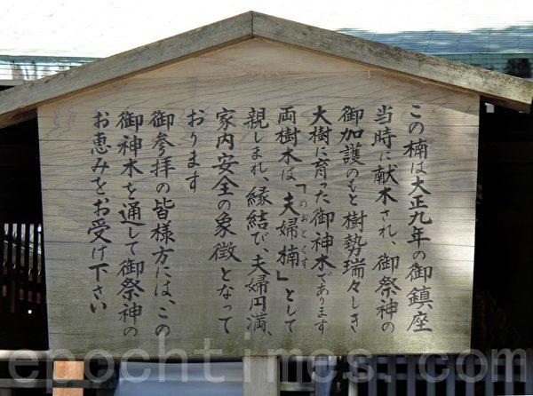 明治神宫内的夫妻树说明告示(蓝海/大纪元)