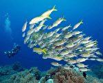 美丽鱼群─10月28日,太平洋小国帕劳宣布创建一个面积广阔的海洋保护区。(RICHARD BROOKS/AFP)
