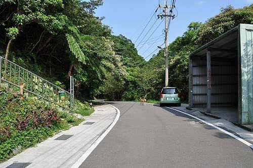 东势坑产业道路。铁皮屋棚对面路旁为碇内尖登山口。 (图片提供:tony)