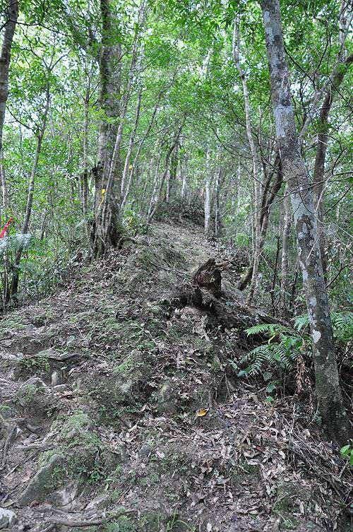 从登山口起登,一小段缓缓上坡路之后,就转为循棱上行的连续陡坡。 (图片提供:tony)