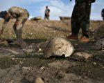 伊拉克北部城镇辛贾尔(Sinjar)又发现3处埋有IS屠杀遇难者尸体的乱坟岗。两周前已经发现2处。图为两周前发现的乱坟岗。(John Moore/Getty Images)