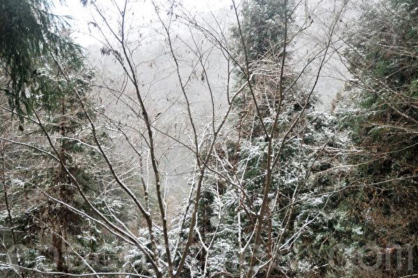 从入口处开始,一路上都是山路,没有围栏,两旁都是被雪覆盖的树木。(孙明国/大纪元)