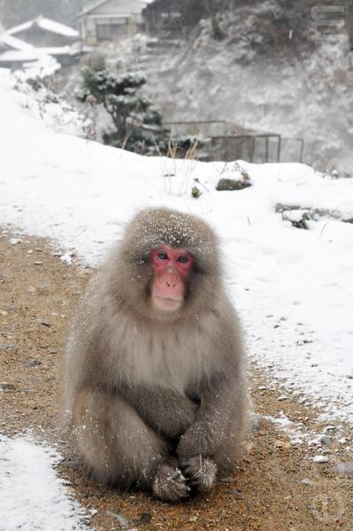 过了售票处,马上就会看到猕猴蹲坐在走道旁,好像在迎接游客的到来。(孙明国/大纪元)