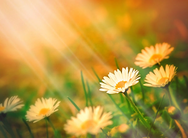 清晨的阳光可提高人体的血清素含量,从而增加人的活力、改善人的情绪。(Fotolia)