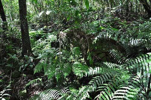 附近树林草蕨中的石厝残垣,是许氏故居。 (图片提供:tony)