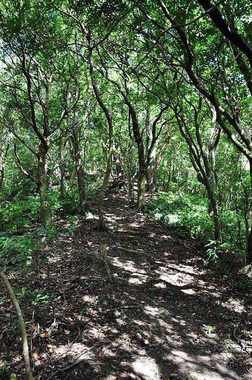 爬回磐石岭。步道全线走于森林里,公路闷热,古道凉爽。 回程时遇到一名跑友,是今天步道途中遇到的唯一游客。 (图片提供:tony)