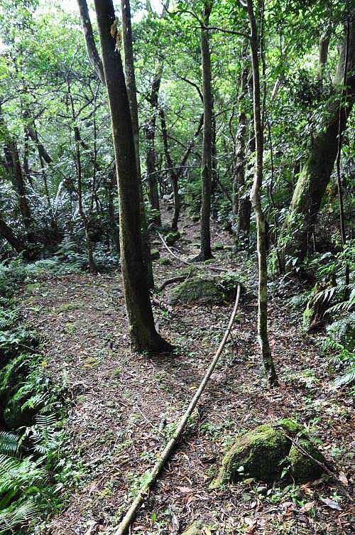 """山路平缓,又有古道氛围,途中一平缓处,树干小牌子写""""廖文鞍""""的地名。 (图片提供:tony)"""