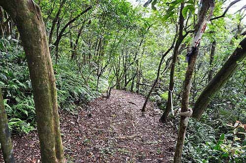 过棱线路与腰绕路的岔路口,选择走往棱线路。 (图片提供:tony)