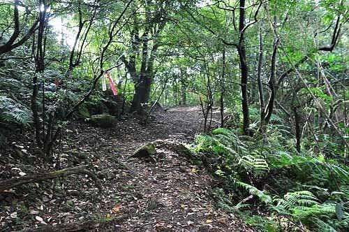 转为宽阔平坦的山路。过吉庆居岔路口时,才明白这条步道就是石底古道其中一段。(图片提供:tony)