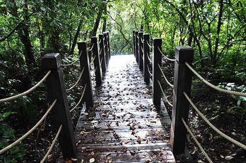 步入入口有一小段木栈道阶梯。 (图片提供:tony)