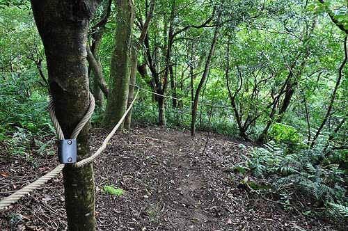 磐石岭登山步道棱线陡下路段(图片提供:tony)