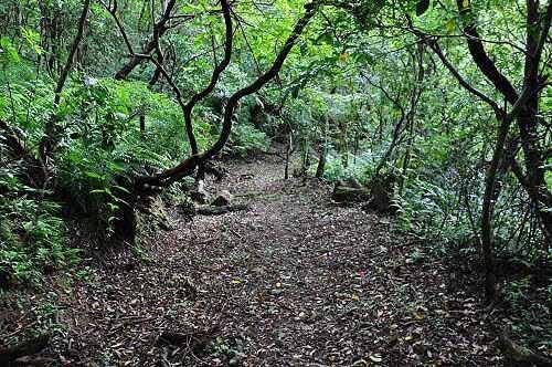 磐石岭登山步道,是昔日汐平古道的一段。(图片提供:tony)