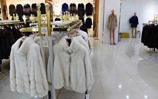 据最新分析显示,喜爱奢侈品的中国人成了北极熊毛皮的主要买家。加拿大的北极熊皮毛商业贸易转向中国交易。图为中国张家口国际皮草城店。(GREG BAKER/AFP/Getty Images)
