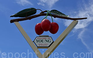 澳洲紐省楊鎮(Young)是澳洲的櫻桃之鄉(簡玬/大紀元)