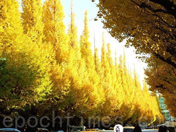 东京著名的银杏景点