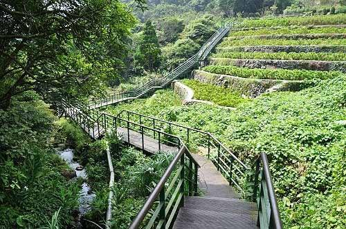 竹子湖青枫步道。(图片提供:tony)
