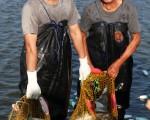 黃國良(左)採用友善養殖,堅持不用藥養出無毒虱目魚,並以低密度方式引用海水混養虱目魚及白蝦。(仙蒂 Sandyho photography提供)
